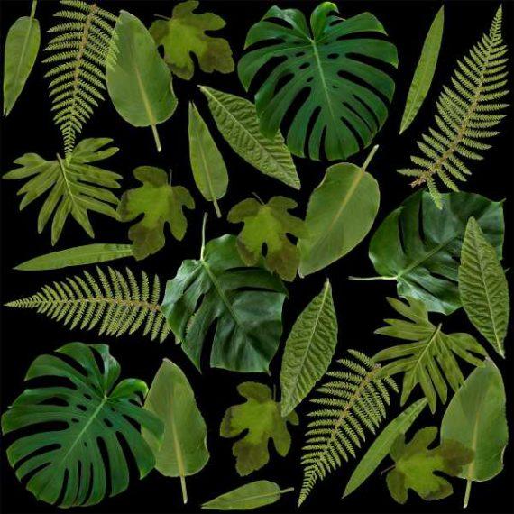 no.11 palmblad